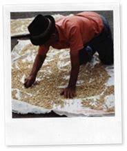 Colombian_Coffee_Farmer